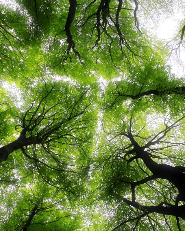 Ground view of tree canopy