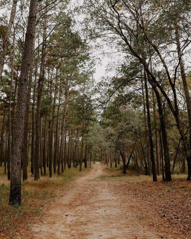 hiking trail in forest