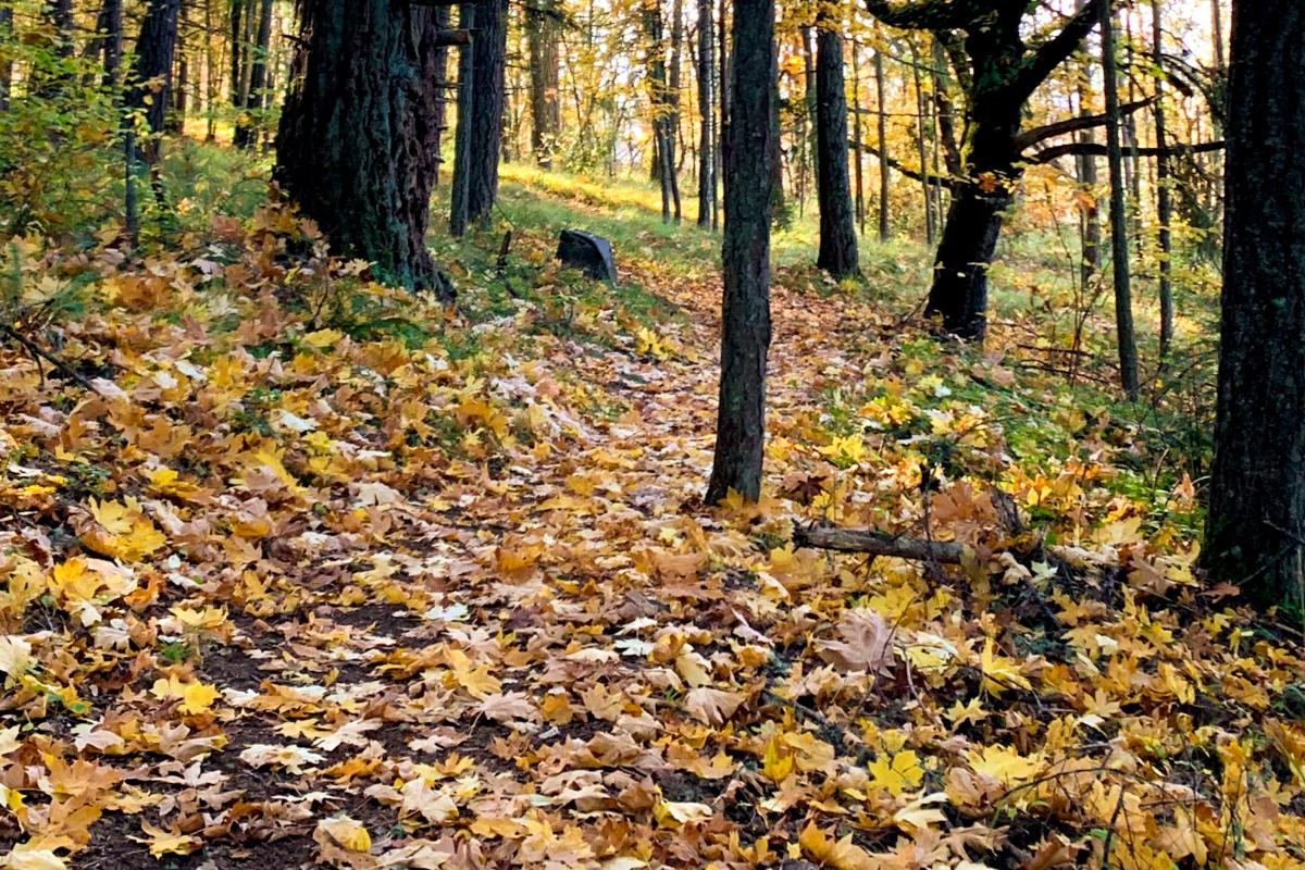 Mount Pisgah Hiking Trails in Fall