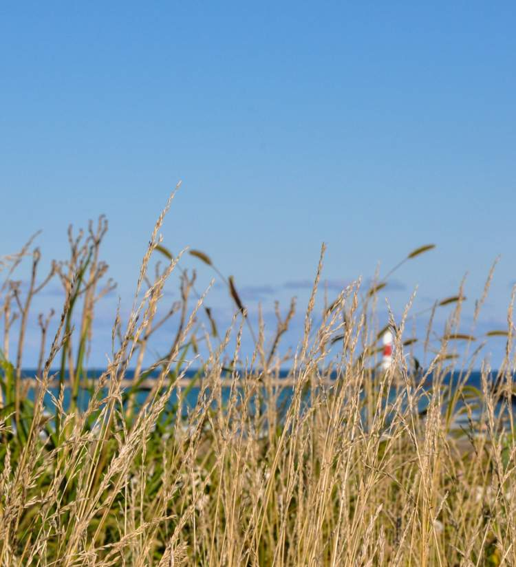 North Pier Lighthouse - Simmons Island Grasses