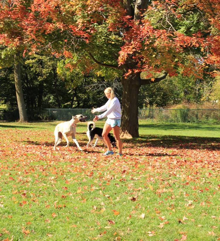 Carlisle Family Dog Park