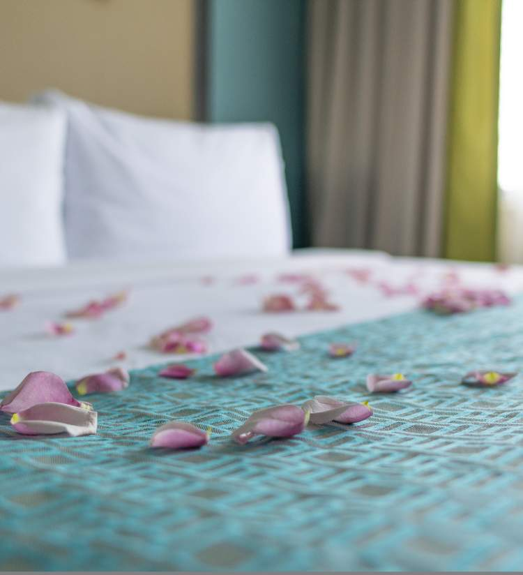 Rose petals on hotel bed