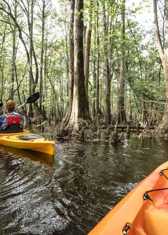 Kayaking Tar River