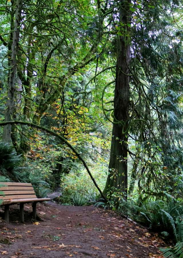 Wooded trail at OO Denny with bench