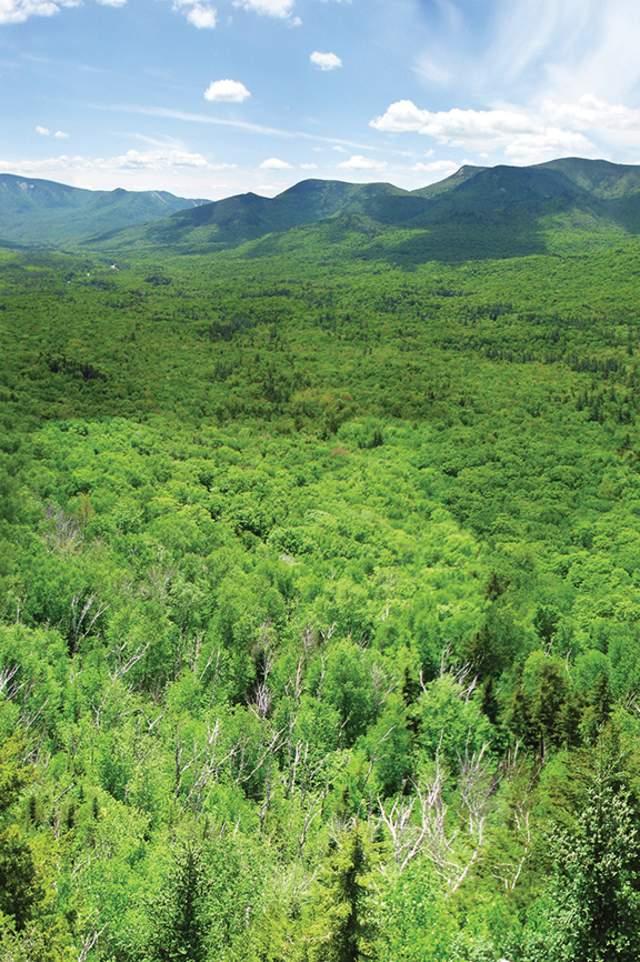 Pemigewassett Wilderness