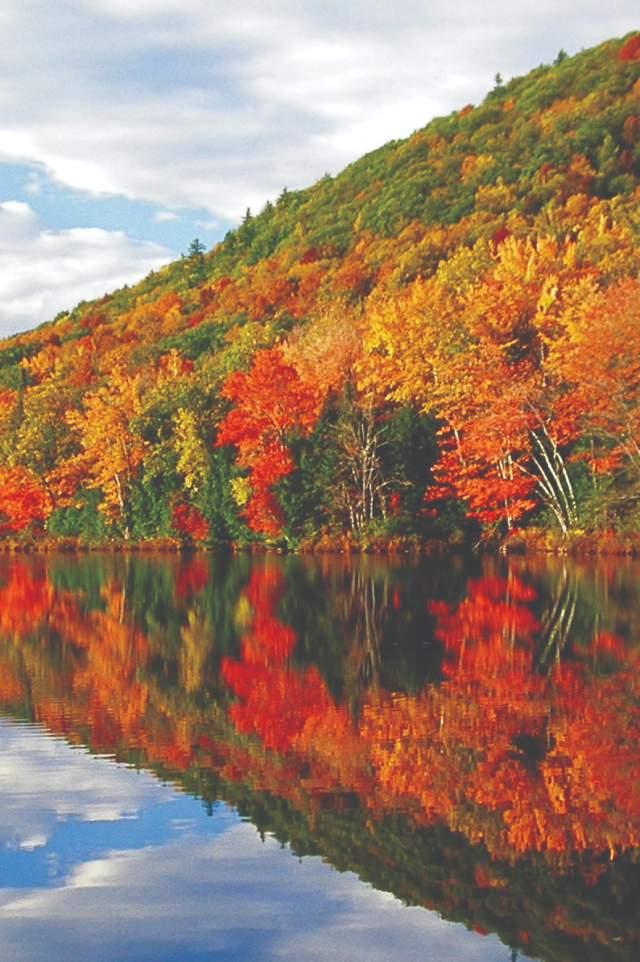 Fall Foliage Pond