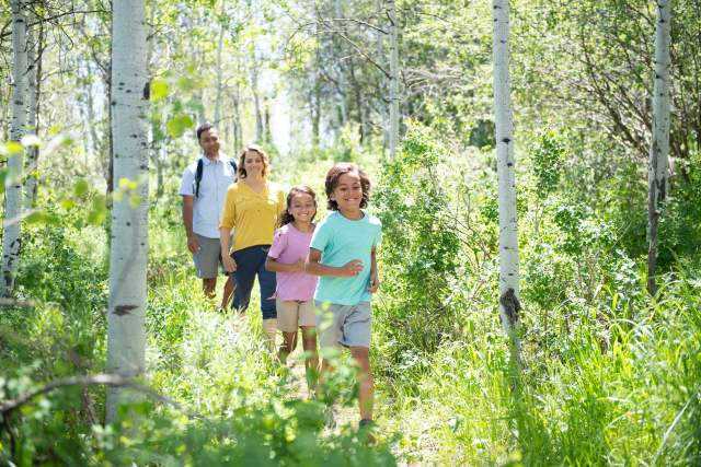 Family Hiking through Aspen trees