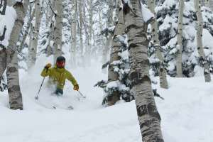 Man skiing through aspen grove on powder day