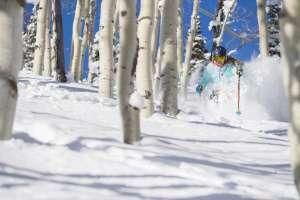 Woman skiing through aspen grove on a powder day
