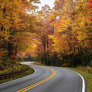Stunning fall color provides a canopy over Highway 276 in Pisgah National Forest near Asheville, NC