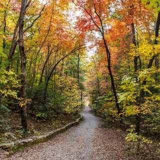 2018 Fall Color North Carolina Arboretum Oct. 31