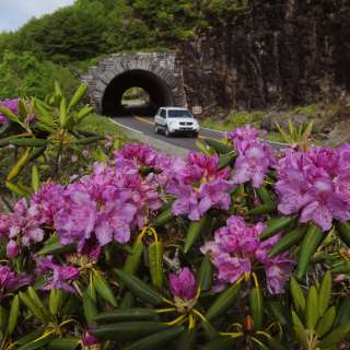 Blue Ridge Parkway Tunnel and Rhododendron