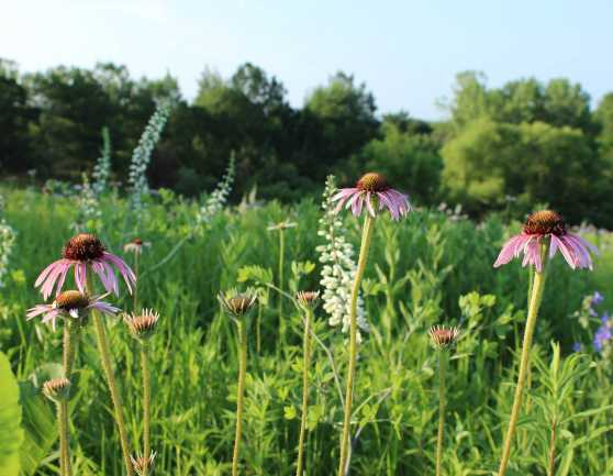 Kent Park Tall Grass