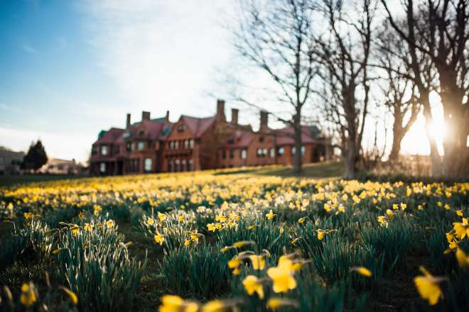 Field of Daffodils With Mansion In Back Ground In Newport, RI