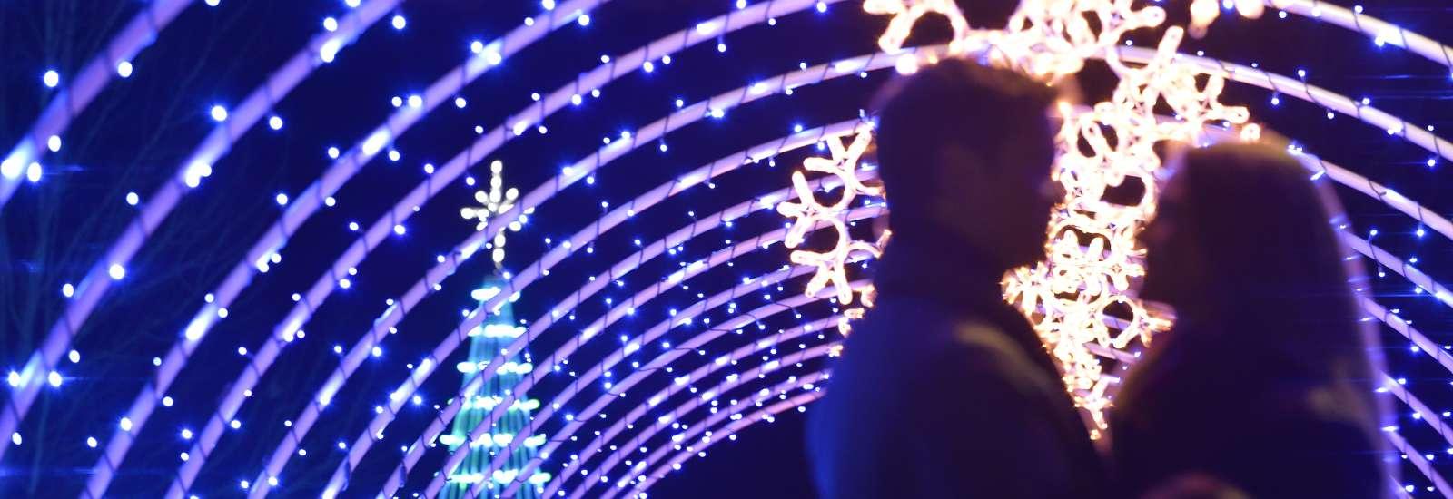 Winter Lights at the NC Arboretum