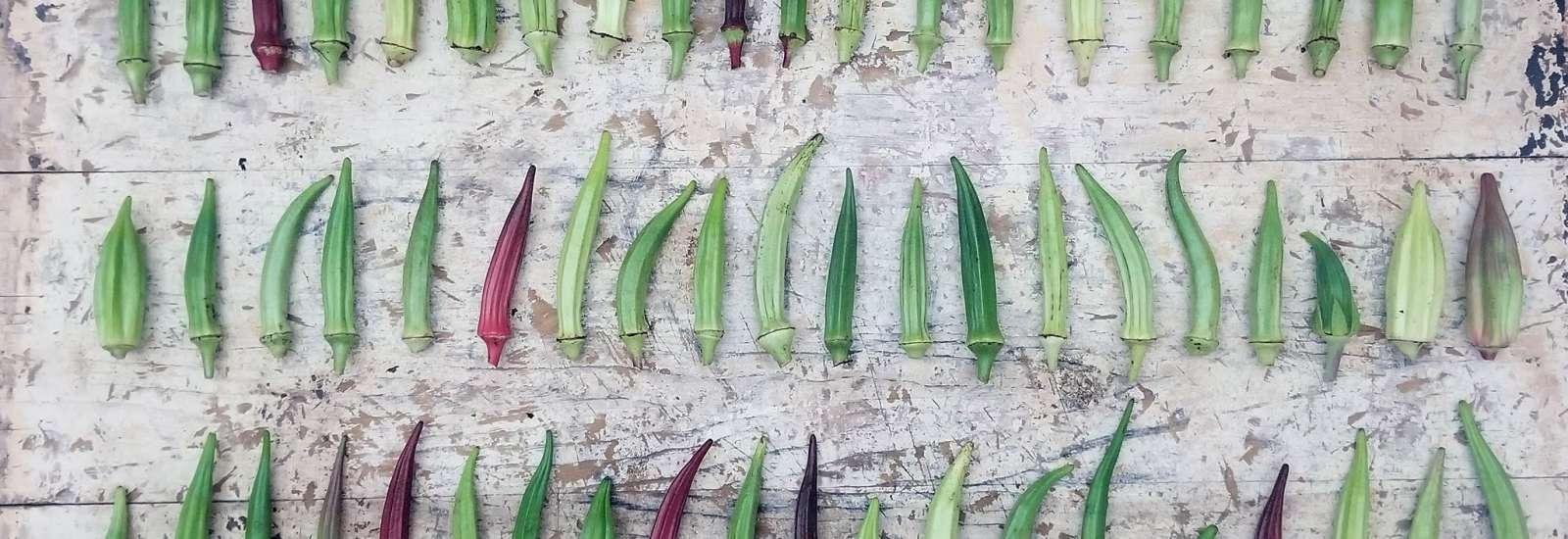 A variety of okra