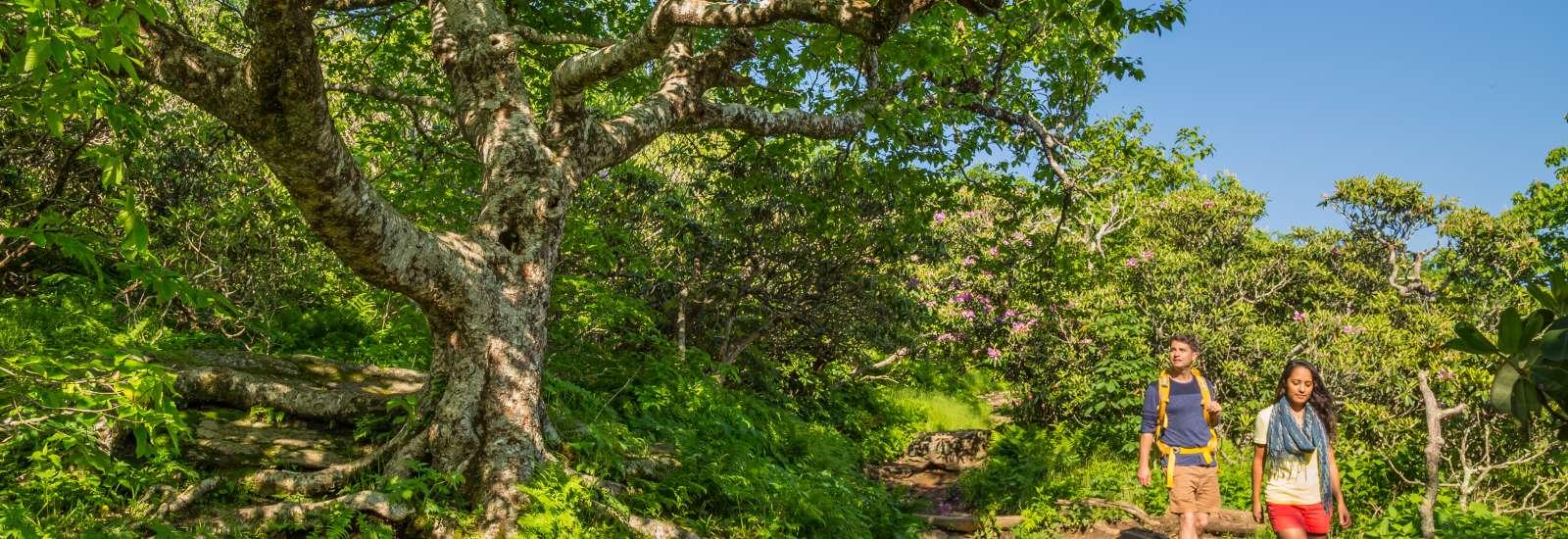 Craggy Gardens Hiking