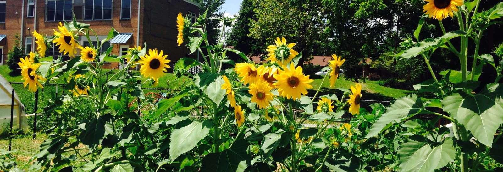 Southside Kitchen & Community Garden