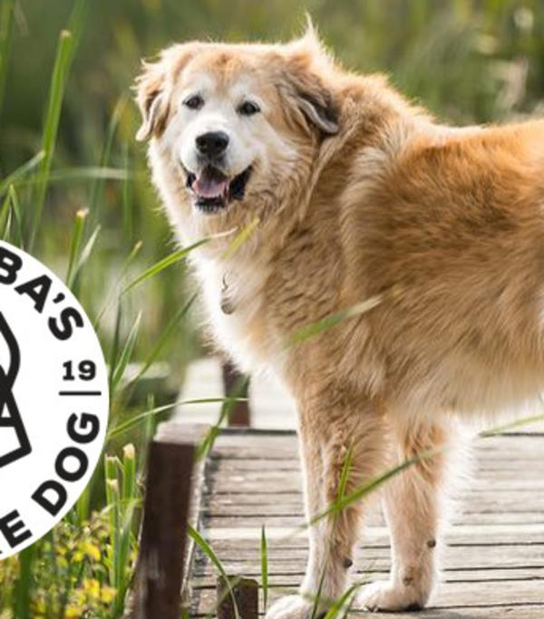 And the winner of Manitoba's Top Adventure Dog 2019 is...