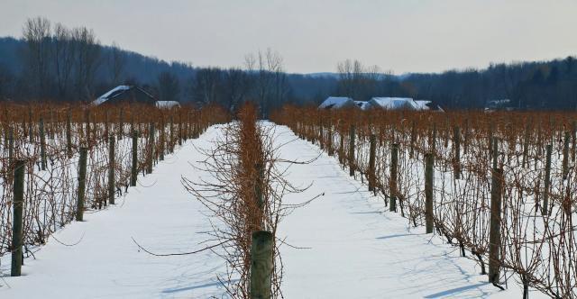 Colloca Estate Winery in the Winter