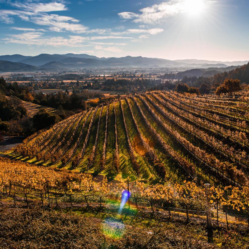 Newton Vineyard in Napa Valley in fall