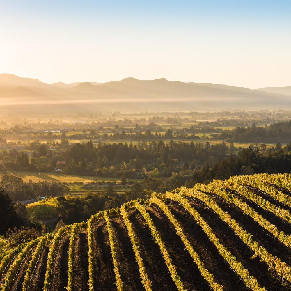 Newton Vineyard in Napa Valley