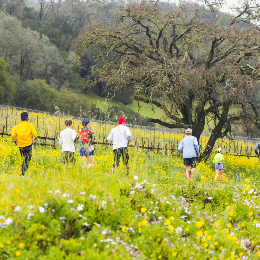 Runners participating in The Napa Valley Marathon