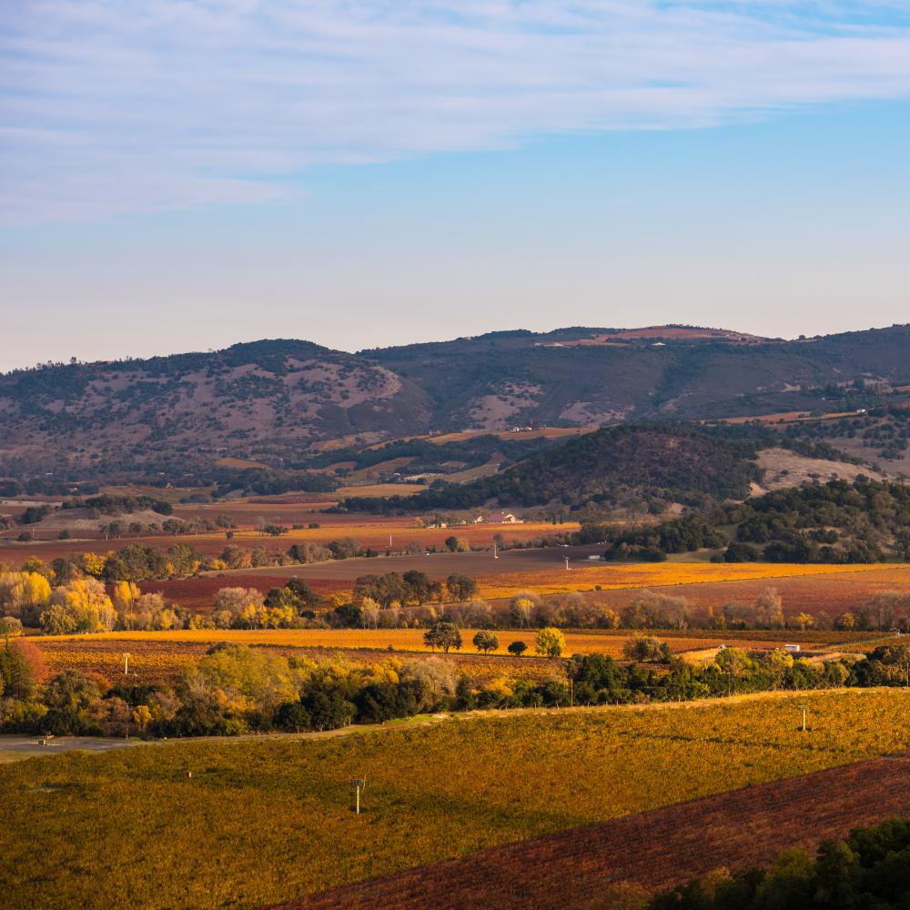 Fall vineyard vista views