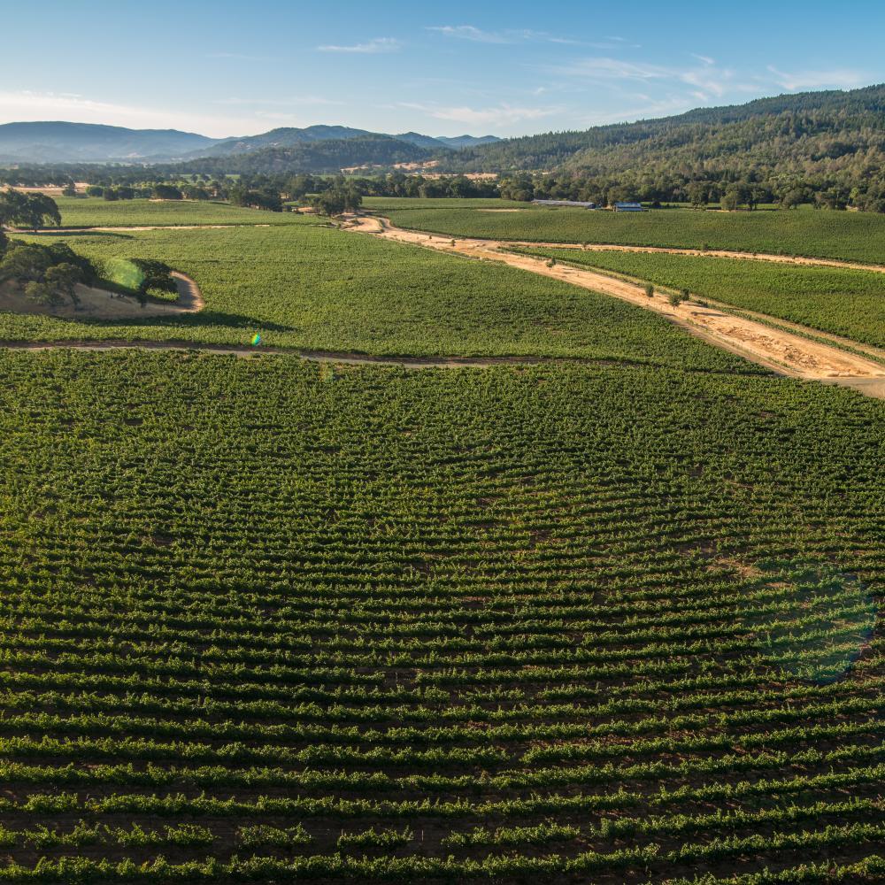 Summer vineyard vista views