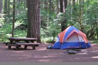 Delta Old Growth Campground, McKenzie River by Natalie Inouye