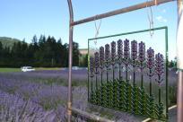 McKenzie River Lavender by Sally McAleer