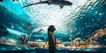 The shark tunnel at Ripley's Aquarium of Canada