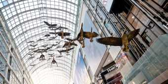 The Canadian geese on display inside the Eaton Centre shopping mall