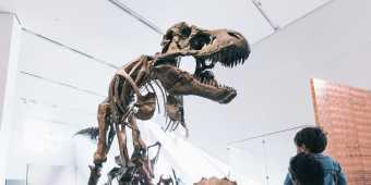 Royal_Ontario_Museum_dinosaur_fossils