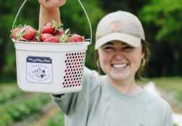 Pick Your Own Strawberries at These York County Farms