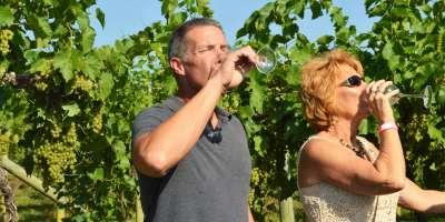 Wine drinkers in vineyard