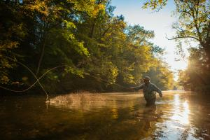 Man Fly-Fishing at Yellow Breeches Creek in Cumberland Valley