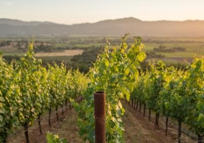 What's New in the Napa Valley, Summer/Fall 2019