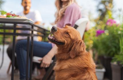 Dog on restaurant patio