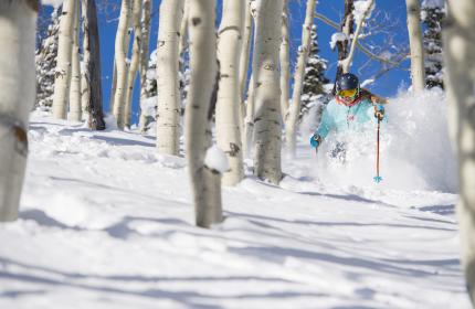 Woman skiing through aspen grove on a powder day