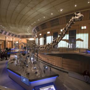 Cincinnati Museum Center Dino Hall featuring a dinosaur skeleton