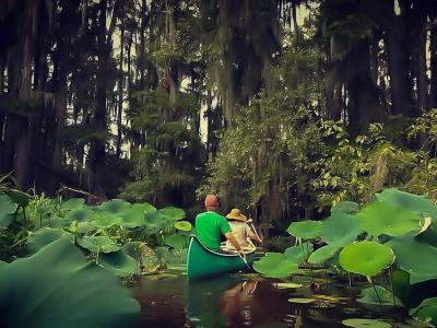 Caddo Lake In Texas | State Park, Wildlife & Canoeing