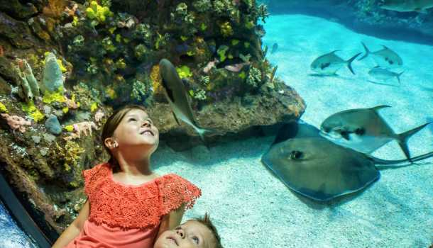 Aquarium kids