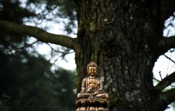 Buddha In Front Of Tree
