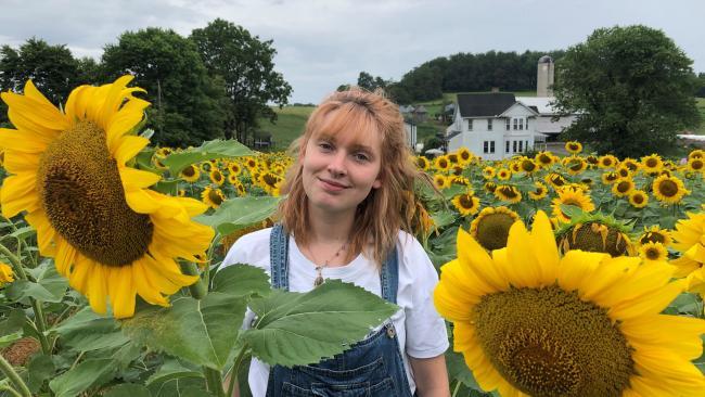 Maple Bottom Farm Sunflowers