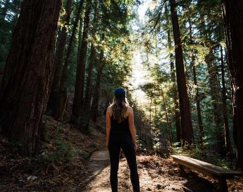 redwood-trails-canyon-ranch-woodside