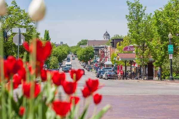 Tulips & Kirkwood Street View
