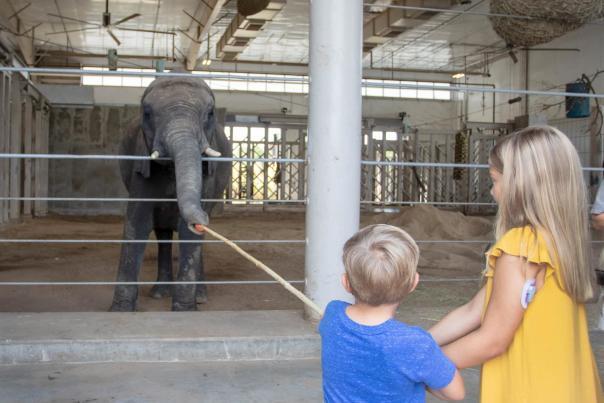 Elephant Wild Encounter at Sedgwick County Zoo
