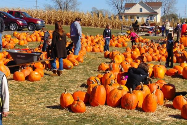 Pumpkin Patches in Wichita