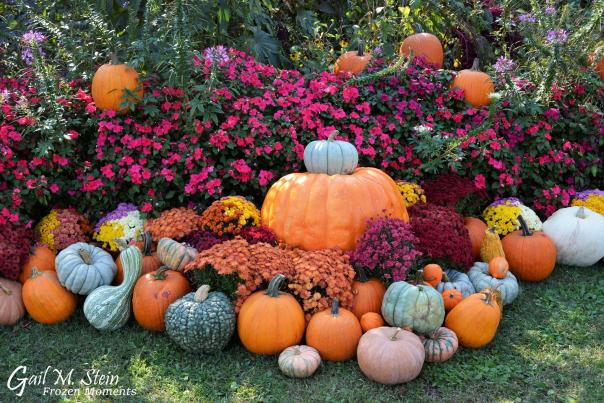 Fall pumpkins & flowers outside Spa State Park